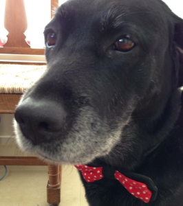 photo of arrow with a christmas bow tie